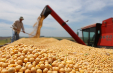Ministry of Finance approves General tax consultation to allow VAT refunds for soybean and rapeseed exports